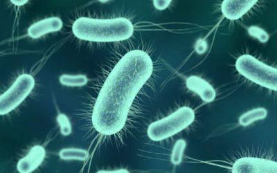 Cobre bactericida llega a la industria lechera