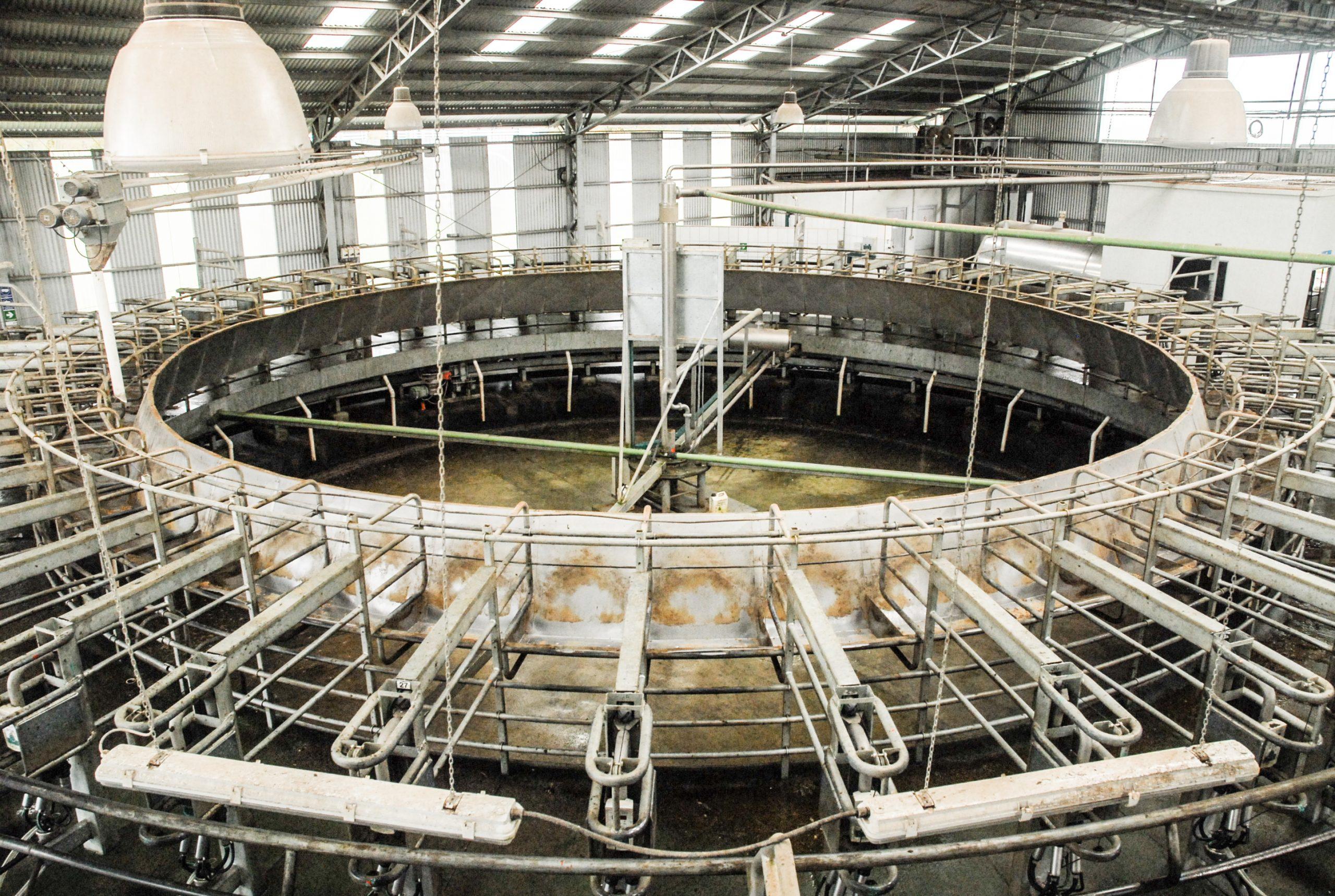 Cobre bactericida llega a la industria lechera chilena 1