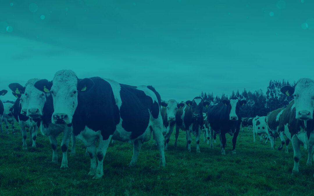 Informe sobre evaluación del poder germicida del antiséptico para pezones cow guard